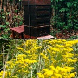 General beekeeping