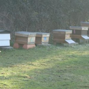 A nice frosty morning,no bees flying and ideal weather.