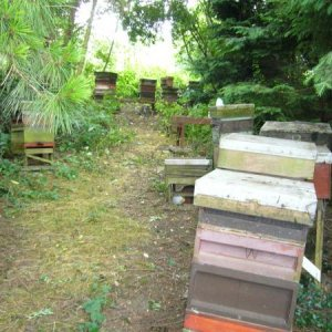Apiary, looking a bit untidy.