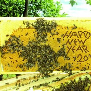 HAPPY NEW YEAR TO ALL ON HERE FROM BEES4U