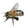 OXFORDBEE's Avatar