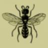 hymentoptera