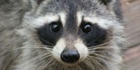 how-to-avoid-raccoon-eyes-while-tanning-1.jpg