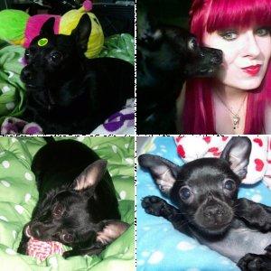 Pet Photos!!