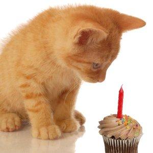 Birthday_kitty.jpg