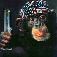 Bugus_Monkey