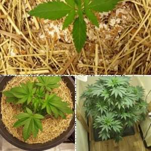 Current Grow 2020
