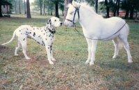 max foal magic-001.jpg