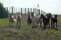stallions08DSC_6789_edited.jpg