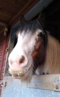 horse with moustache.jpg