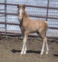 Tana foal - july 12, 2020.jpg