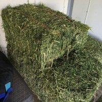 crimped hay.jpg