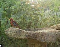 wet cardinal.jpg