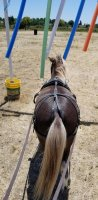 Rocko's tail.jpg