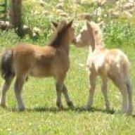 horsehug