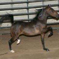 disneyhorse
