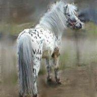 Little Wee Horse Farm