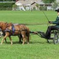 hobbyhorse23