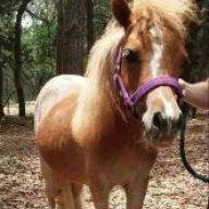 Mini Gray Heart Mini Horse