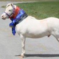 Shandyhorse