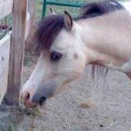 Charlie Horse Acres
