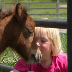april 2010 foals 164.jpg