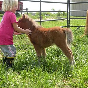 april 2010 foals 190.jpg