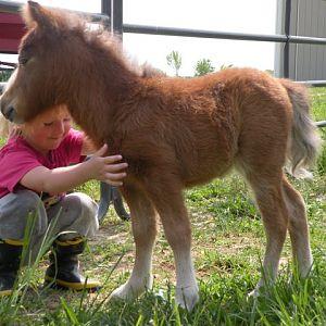 april 2010 foals 193.jpg