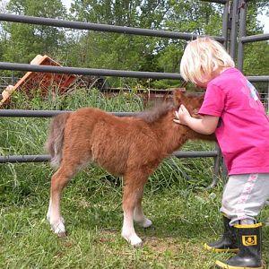 april 2010 foals 207.jpg