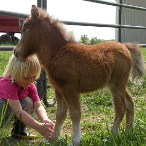 april 2010 foals 194.jpg
