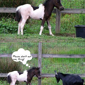 Romeo and a strange creature: