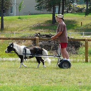 Me Jo, training chariot