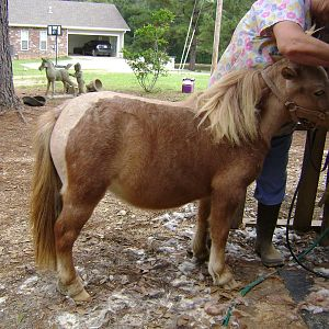 Horse 070.JPG