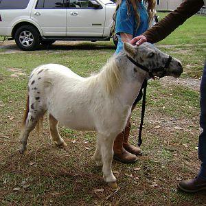 Horse 073.JPG