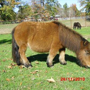 horses november 2010 133.jpg