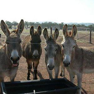 The Donkey Shop Quartet