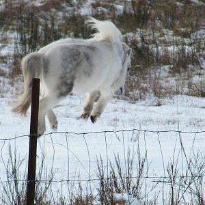 Flyin Snow Mister!