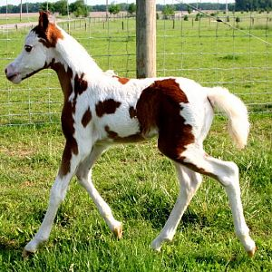 obsession2011filly.jpg