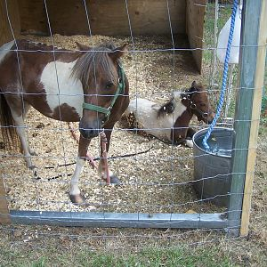 The Mare & Foal when they came