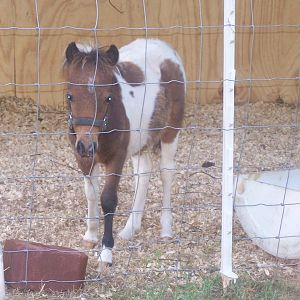 foal with no name yet