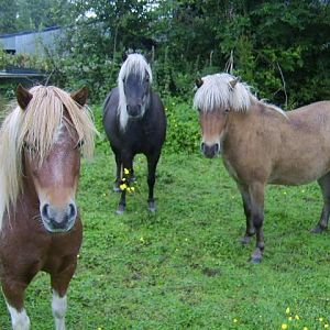 some of my broodmares