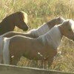 Backlit horsies.