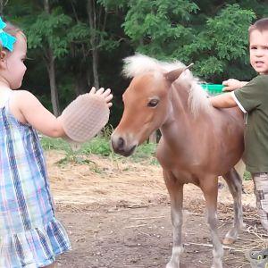 Andrew & Emily grooming.jpg
