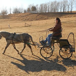 2011 foals and Lex 033.JPG