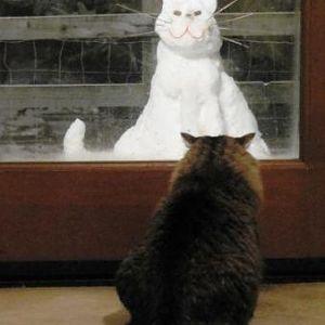 Bobber vs Snow Kitty