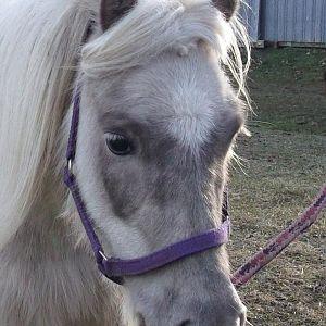 Mimi (Double B Farms Grey Melody)