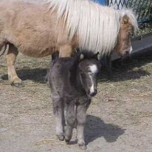 """Kinson and his """"horse Mom"""""""