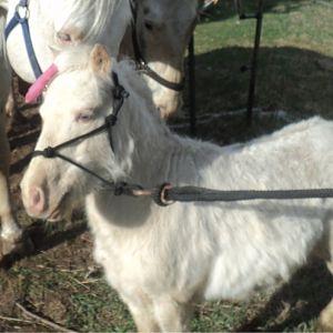 Dusty the foal's sire