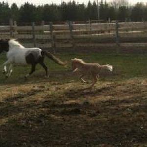 Josie and Jasmine Running