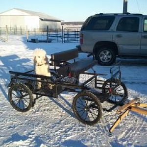 Mali cant wait to go for a real ride in the new wagon.